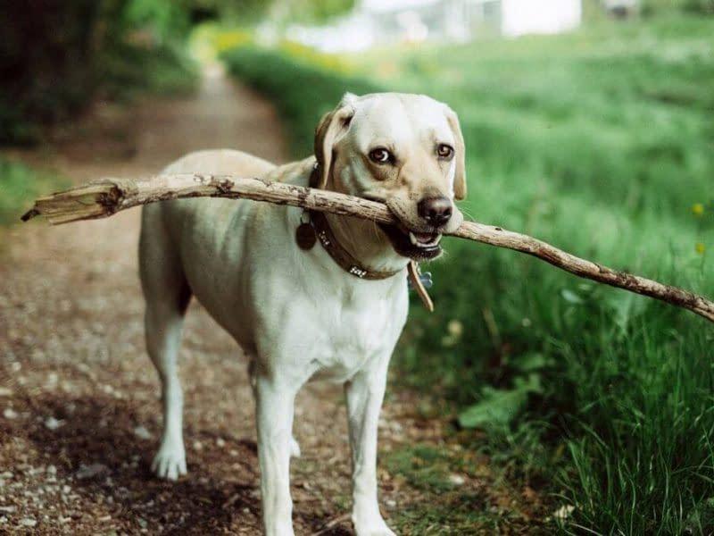 Dog-Care-Web-Template