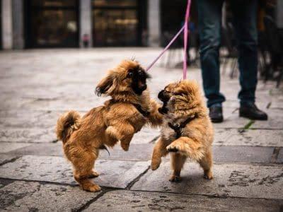 Dog Walking Theme