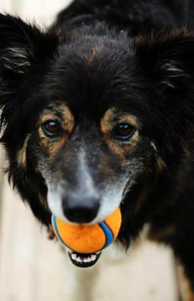 Dog Walking WordPress Template